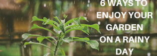 6 Ways to Enjoy Your Garden On a Rainy Day