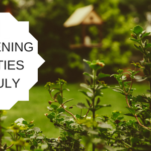 5 gardening activities for July