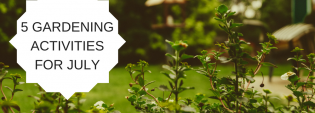 5 gardening activities for July