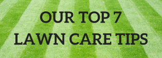 Out Top 7 Lawn Care Tips