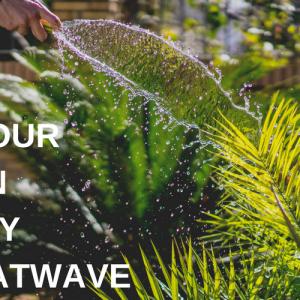 Keep your garden healthy in a heatwave